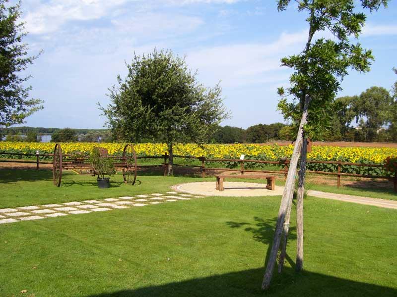 vista dal giardino con girasole
