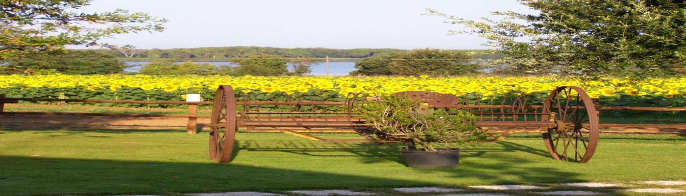 sono tutte indipendenti e danno su un ampio giardino che spazia fino all'orizzonte dei nostri campi e del lago di Caprolace